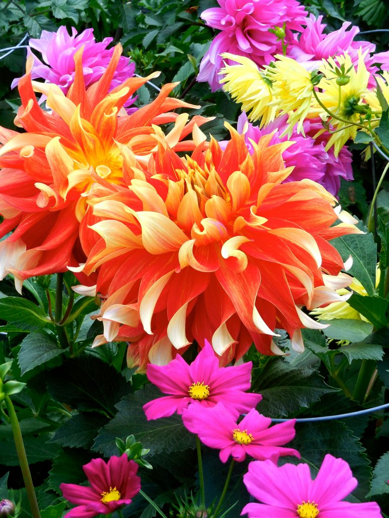 flower garden in Alaska