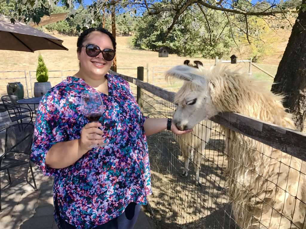 Rain Dance Vineyards, feeding a llama, Newberg, Oregon