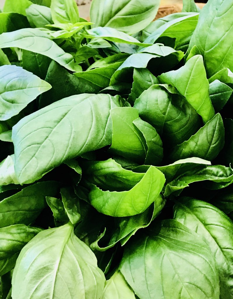 Basil in the farmers' market, Siena, Italy.