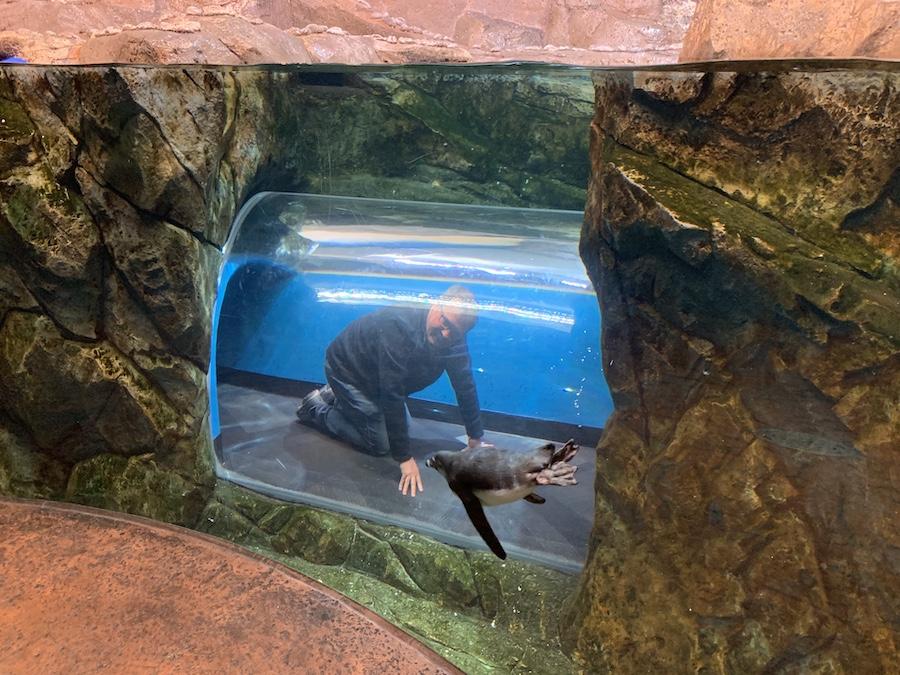 Georgia Aquarium Penguin Tunnel