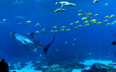 Swim with whale sharks and other tips for your visit to the Georgia Aquarium