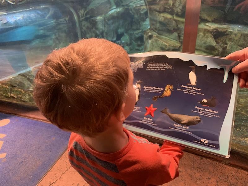 dive card at Georgia aquarium
