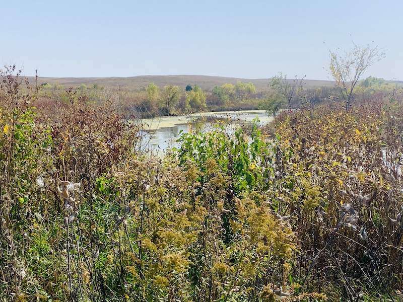 wetlands at spring creek prairie